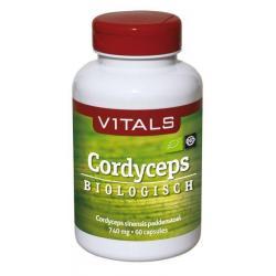 Cordyceps CS-4 740mg